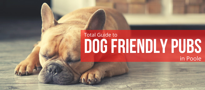 Dog Friendly Pubs in Poole