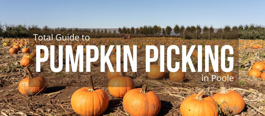 THE BEST PUMPKIN PICKING PLACES IN AND AROUND Poole