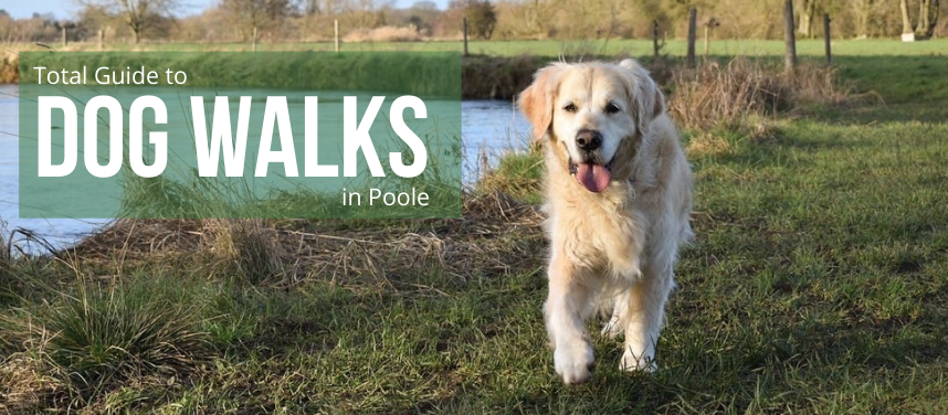 Top 10 Best Dog Walks in Poole